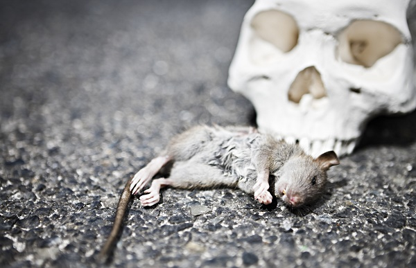 Γιατί φοβόμαστε τα ποντίκια; Η πανδημία που εξαφάνισε το 1/3 της Ευρώπης.
